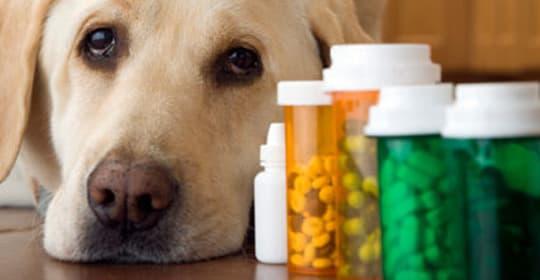 farmacia-veterinaria