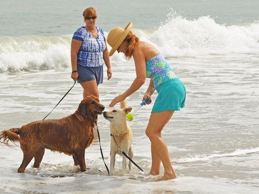 viagem-para-praia-com-cachorro